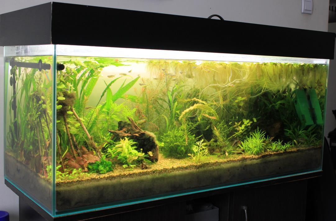 Akwarium po pół roku od założenia
