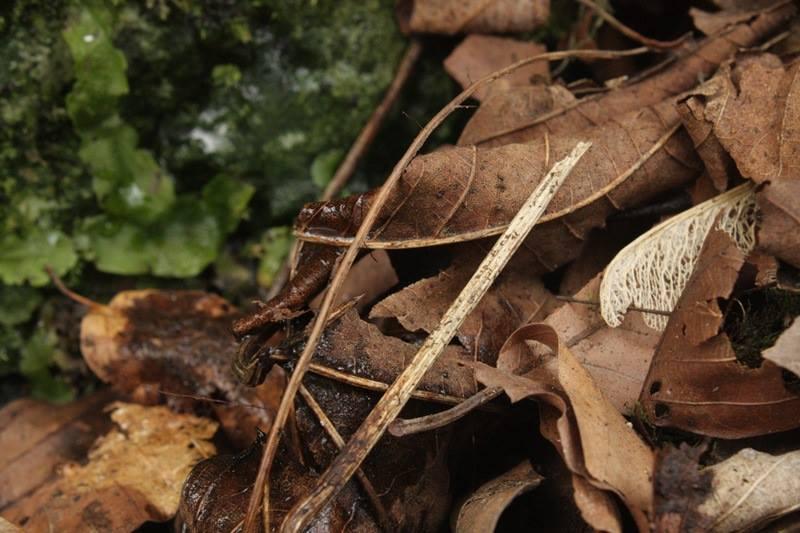 Leśna ściółka może być użyta do stworzenia biologicznie aktywnego podłoża do terrarium